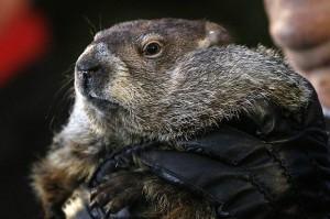 00-marmot